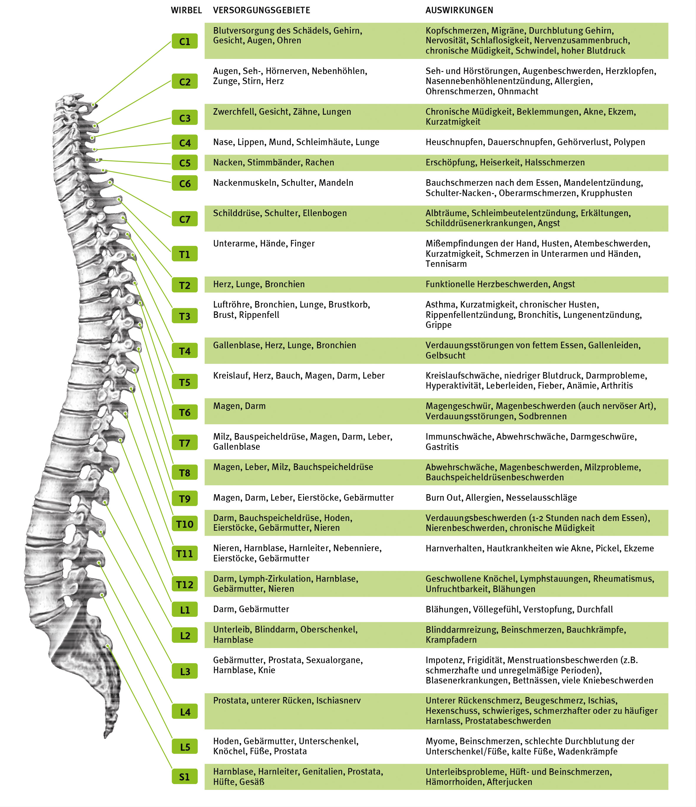 nervensystem-gro