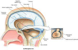 cranial facial release